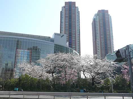 東京・六本木のテレ朝前