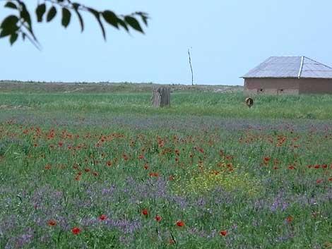 ウズベキスタン大平原の春
