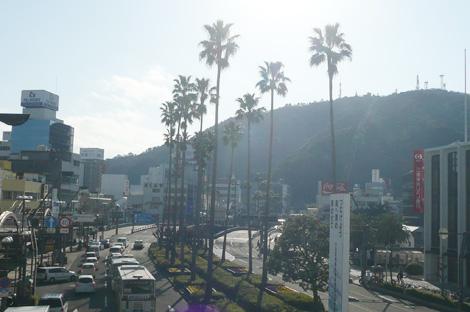 徳島駅前のパームツリー